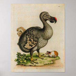 1760 Druk van de Illustratie van de Vogel van het Poster