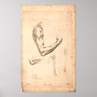 1833 de vintage Druk van de Anatomie van het Wapen Poster