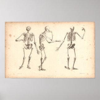 1833 Druk van de Anatomie van skeletten de Vintage Poster