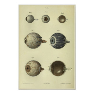 1866 de menselijke Druk van de Anatomie van het Poster