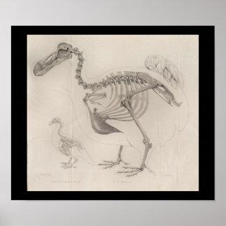 1866 de Vintage Druk van het Skelet van de Vogel Poster