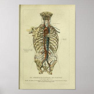 1886 de vintage Menselijke Druk van de Anatomie Poster