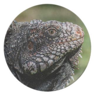 1920px-Iguanidae_head_from_Venezuela Melamine+bord
