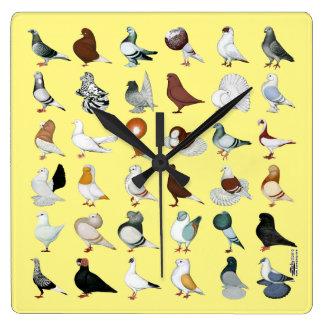 36 de Rassen van de duif Vierkante Klok