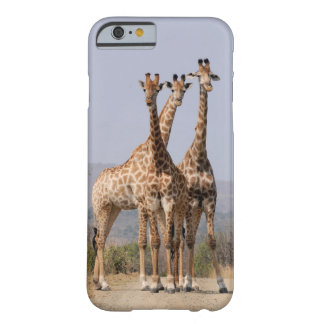 3 giraffen barely there iPhone 6 hoesje