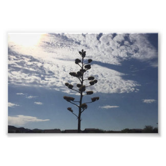 6X4 fotodruk van bloeiende agave Foto