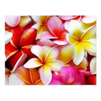 Aangepaste de Bloem van Frangipani Hawaï van Briefkaart