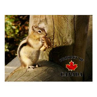 Aardeekhoorn die Paddestoelen eten Briefkaart