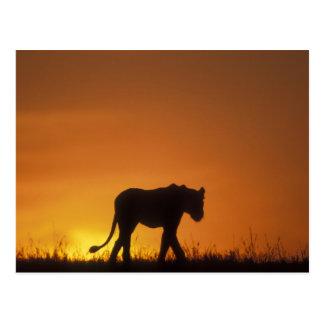 Afrika, Kenia, Reserve van het Spel van Masai Briefkaart