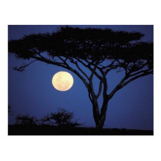 Afrika, Tanzania, Tarangire. De boom van de acacia Briefkaart