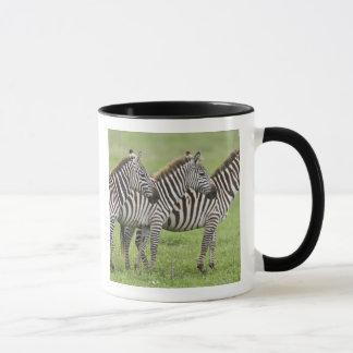 Afrika. Tanzania. Zebras bij Krater Ngorongoro Mok