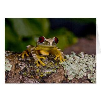 Afrikaans Red Eye Treefrog, Leptopelis 2 Briefkaarten 0