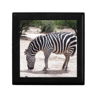 Afrikaans zebra bij de dierentuin decoratiedoosje