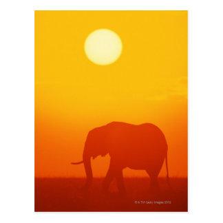 Afrikaanse olifant die bij zonsondergang, Kenia Briefkaart