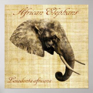 Afrikaanse olifant (geen lijst) poster