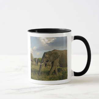 Afrikaanse Olifanten die, africana Loxodonta Mok