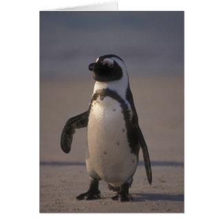 Afrikaanse Pinguïn (demersus Spheniscus) of Domoor Wenskaart