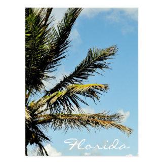 Agaist van de palm de hemel in Florida Briefkaart