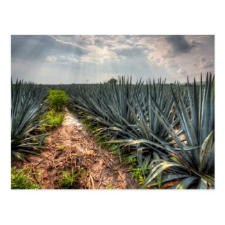 Agave Tequilana Briefkaart