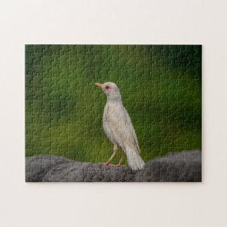 Albino Robin in het Punt van de Kroon Legpuzzel