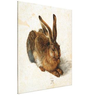 ALBRECHT DÜRER - Jonge hazen 1502 Canvas Print