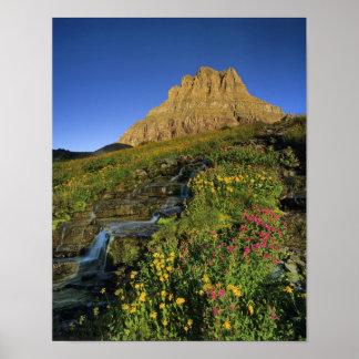 Alpiene wildflowers & MT Clements bij Logan Pas Poster