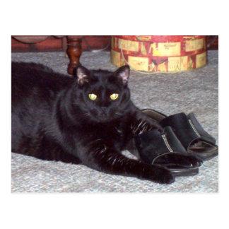 """""""Als de Schoen"""" het Briefkaart van de Kat past"""