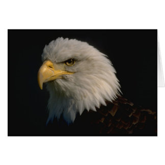 Amerikaans Kaal Eagle Briefkaarten 0
