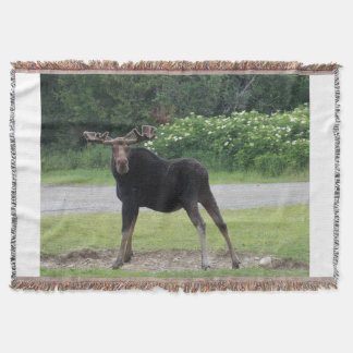 Amerikaanse elanden 1 van Greenville Deken