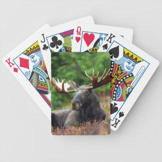 Amerikaanse elanden pak kaarten