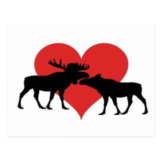 Amerikaanse elanden stier en koe briefkaart