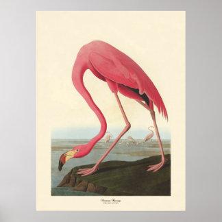 Amerikaanse Flamingo | John James Audubon Poster