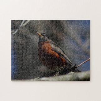 Amerikaanse Robin, het Raadsel van de Foto Puzzel