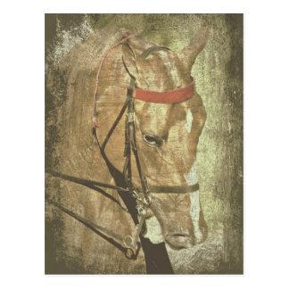 Amerikaanse Saddlebred Briefkaart