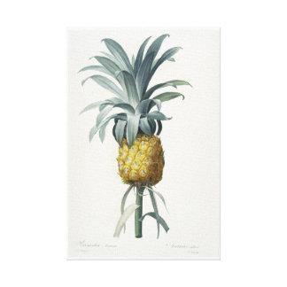 Ananas Canvas Print
