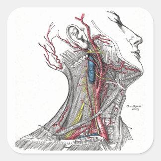 Anatomie van de Hals Vierkante Sticker
