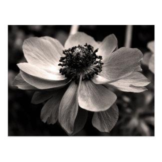 Anemoon - BloemenFotografie - Briefkaart