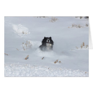 Angelo Border collie dat door de Sneeuw stormt Kaart