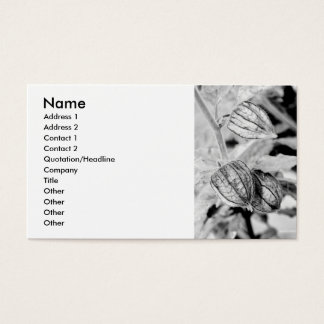 Angulata van Physalis Visitekaartjes