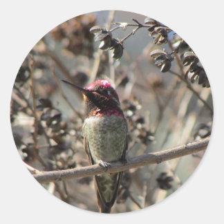 Anna de Stickers van de Kolibrie