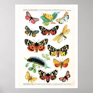 Antiek bord, vlinders van Europa: bord 10 Poster