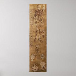Antiek silk painting osteology skeleton medicine poster