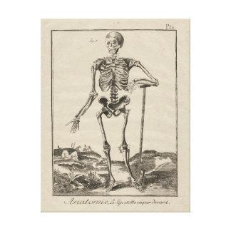 Antiek Skelet van de Encyclopedie van Diderot Canvas Afdrukken