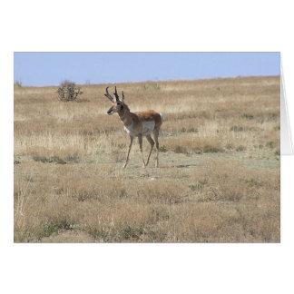 Antilope in Profiel Wenskaart