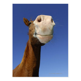 Arabisch Paard, Beieren, Duitsland Briefkaart