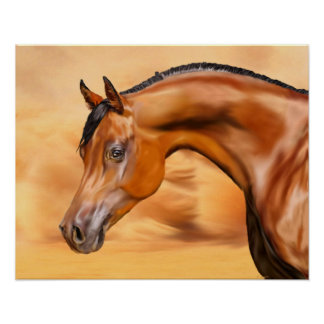 Arabisch Paard Poster