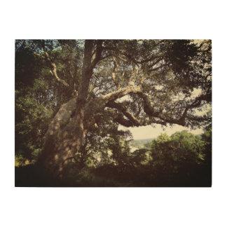 Art. van de Muur van de Foto van de boom het Hout Afdruk