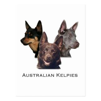 Australisch kelpiesTrio Briefkaart