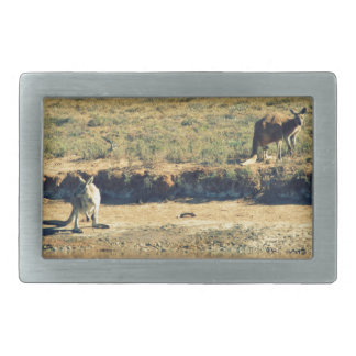 Australische kangoroo gesp