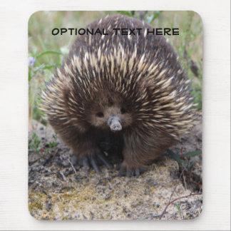Australische Leuke Dierlijke Foto Echidna Muismat